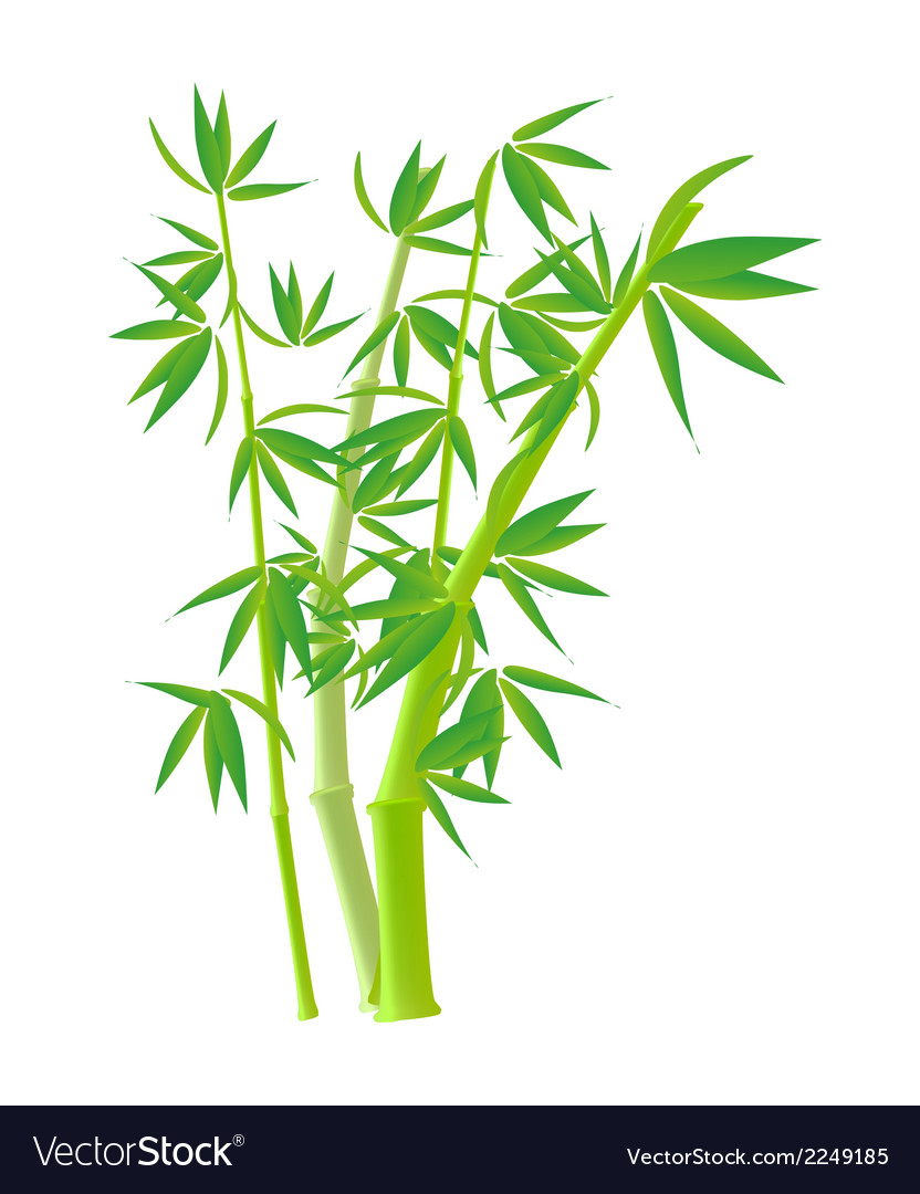 bamboo stock photo images clipart royalty free vector image  vectorstock