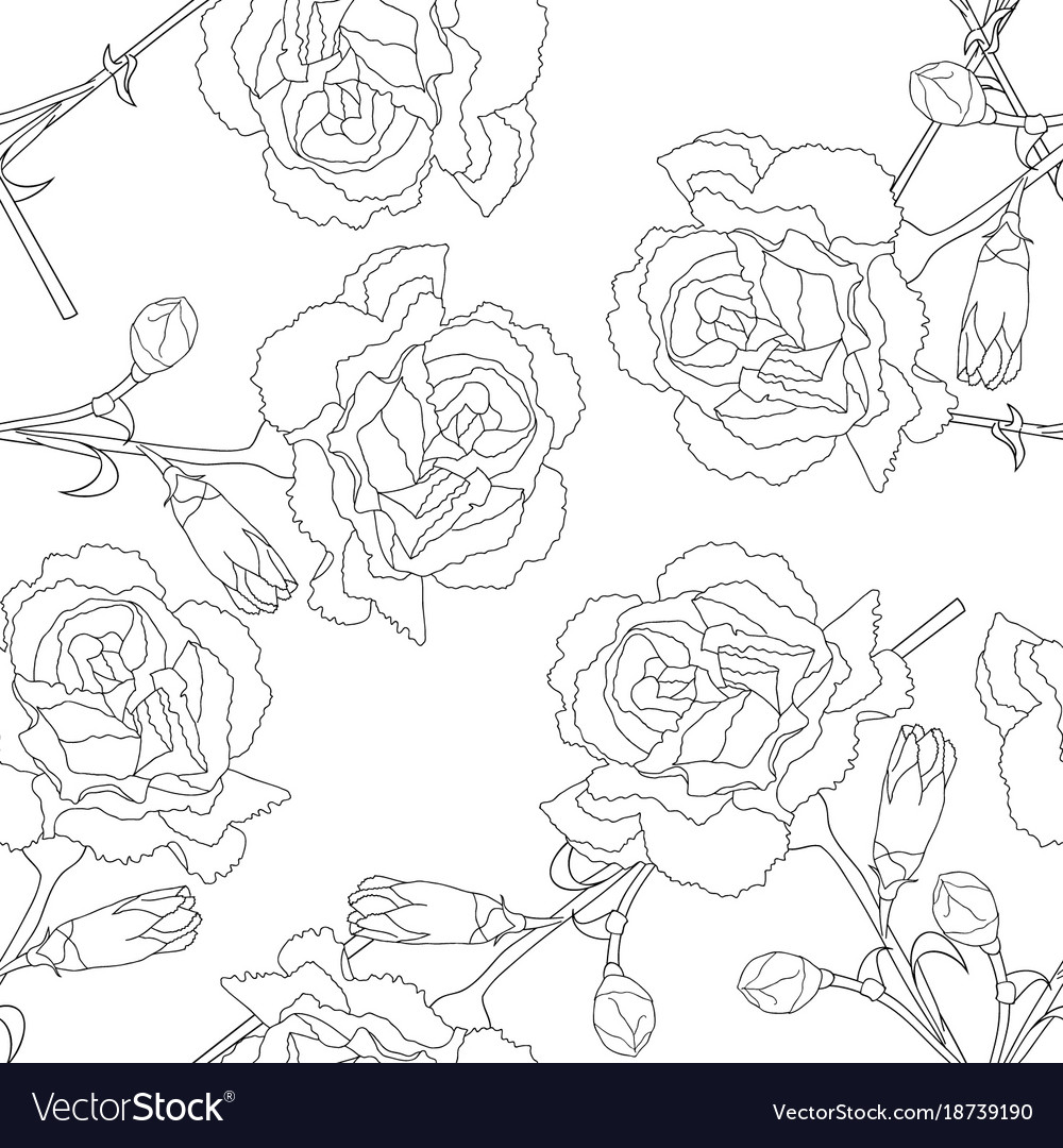 Carnation flower on white background vector image