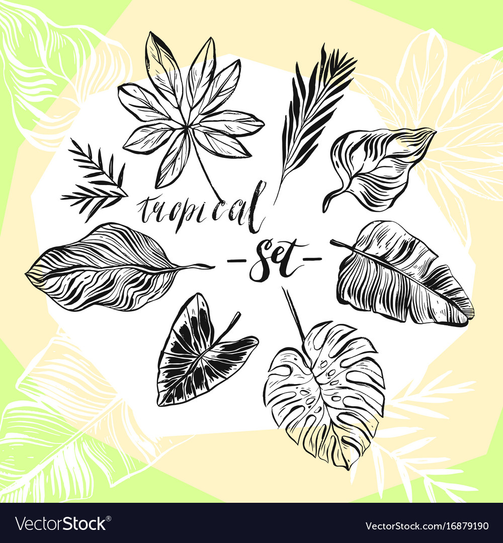 Hand drawn abstract graphic summer vector image