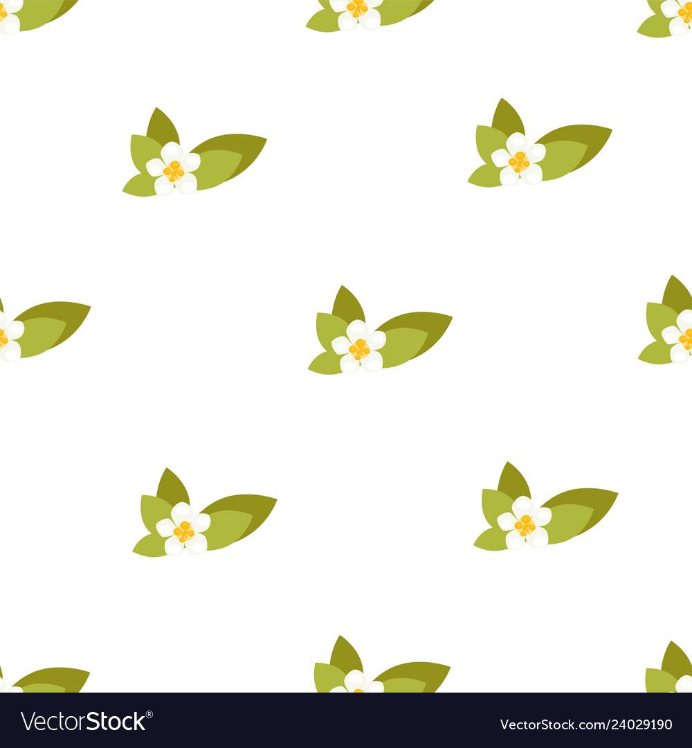 Seamless pattern with jasmine flowers