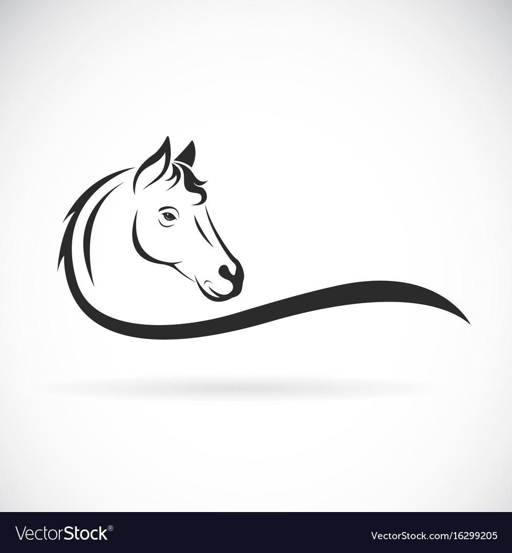 Horse head on white background wild animal