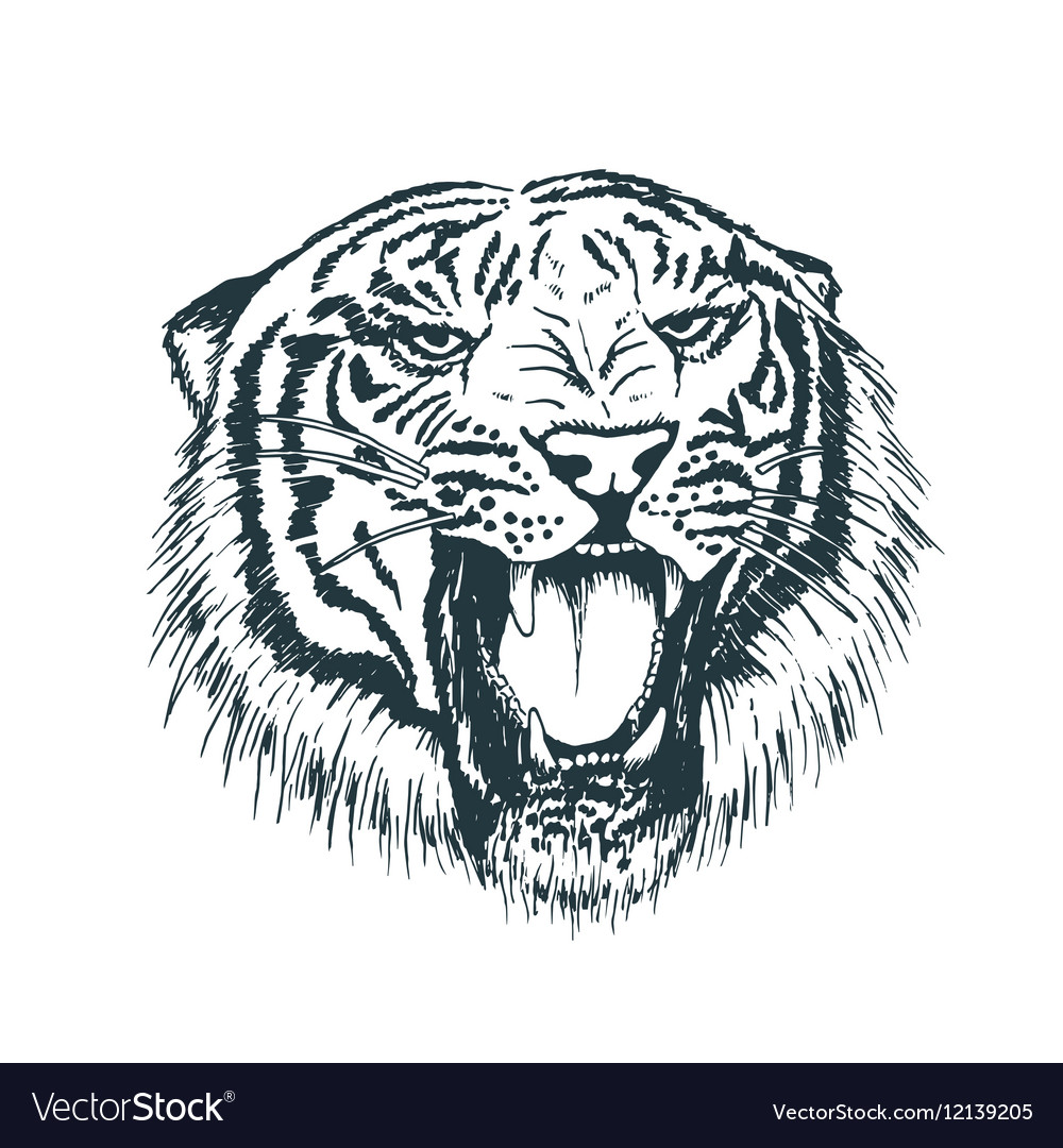 Tiger portraithand drawn style