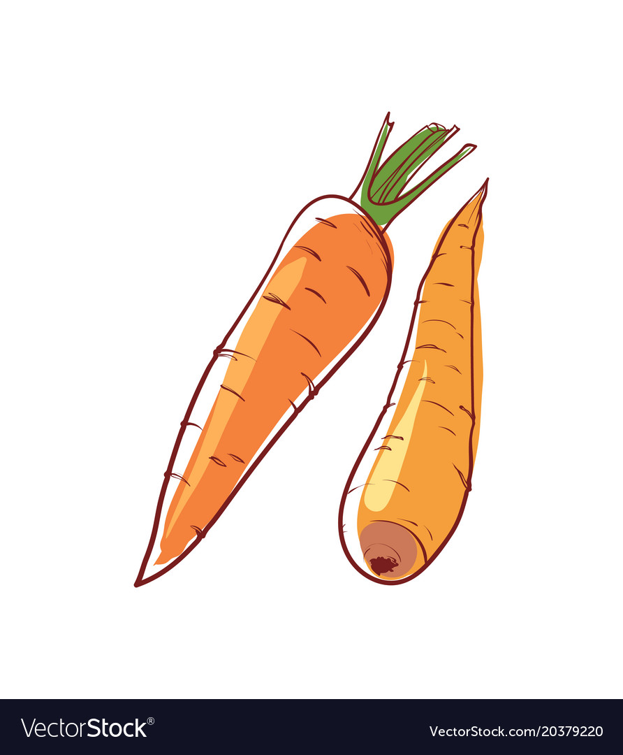 Ripe carrot isolated icon