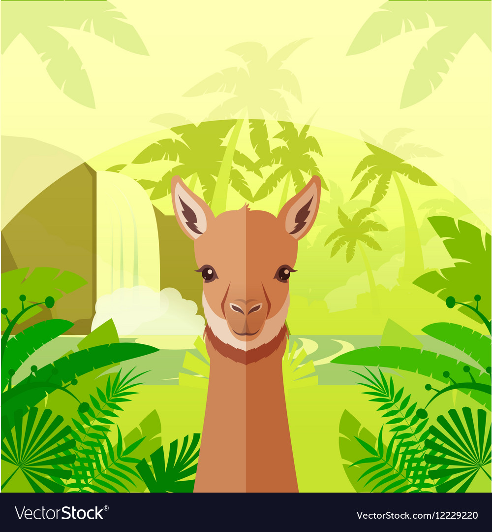 Vicuna on the Jungle Background