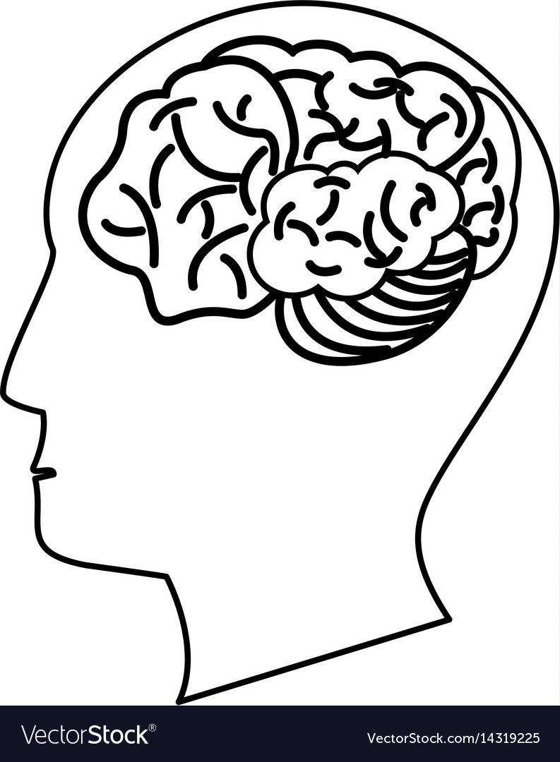 Human head brain outline vector image