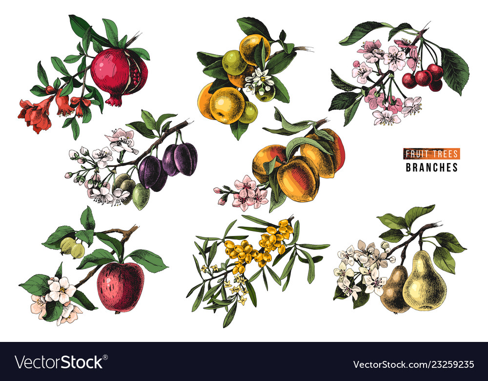 Fruit trees branches