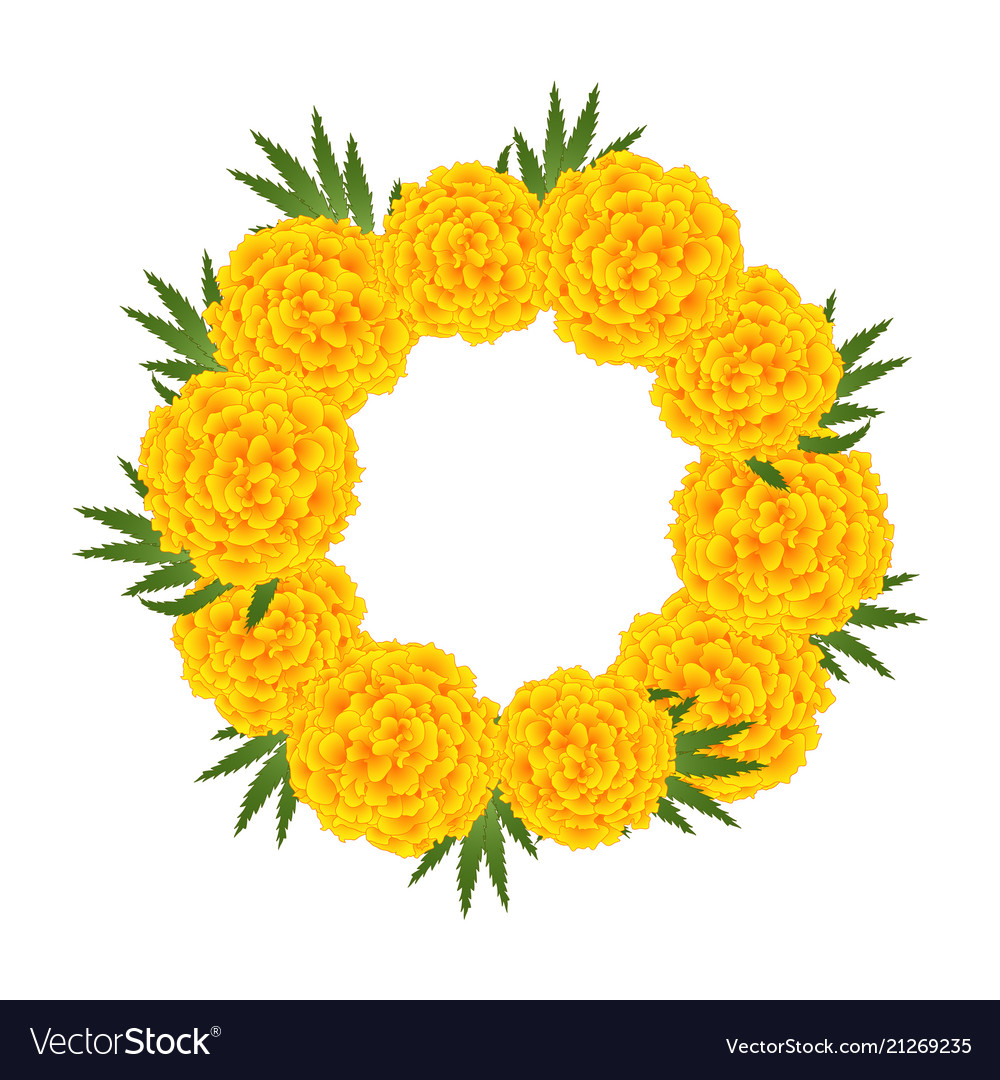 Marigold Flower Tagetes Wreath Royalty Free Vector Image