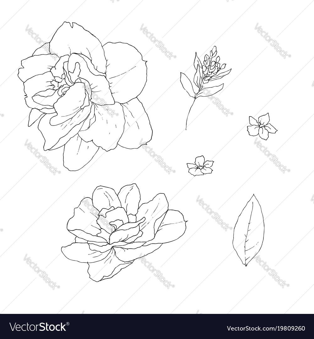 Stock line botanic flowers