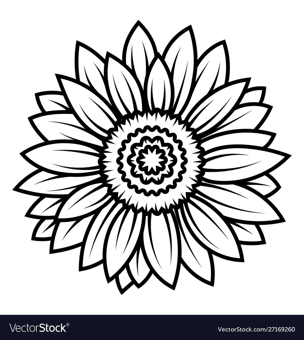 Sunflower flower black and white of