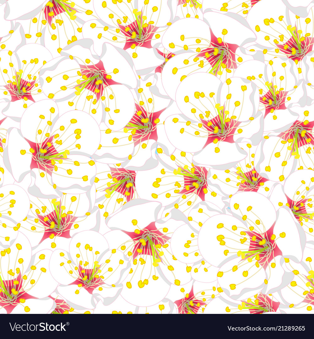 White Plum Blossom Flower Seamless Background Vector Image