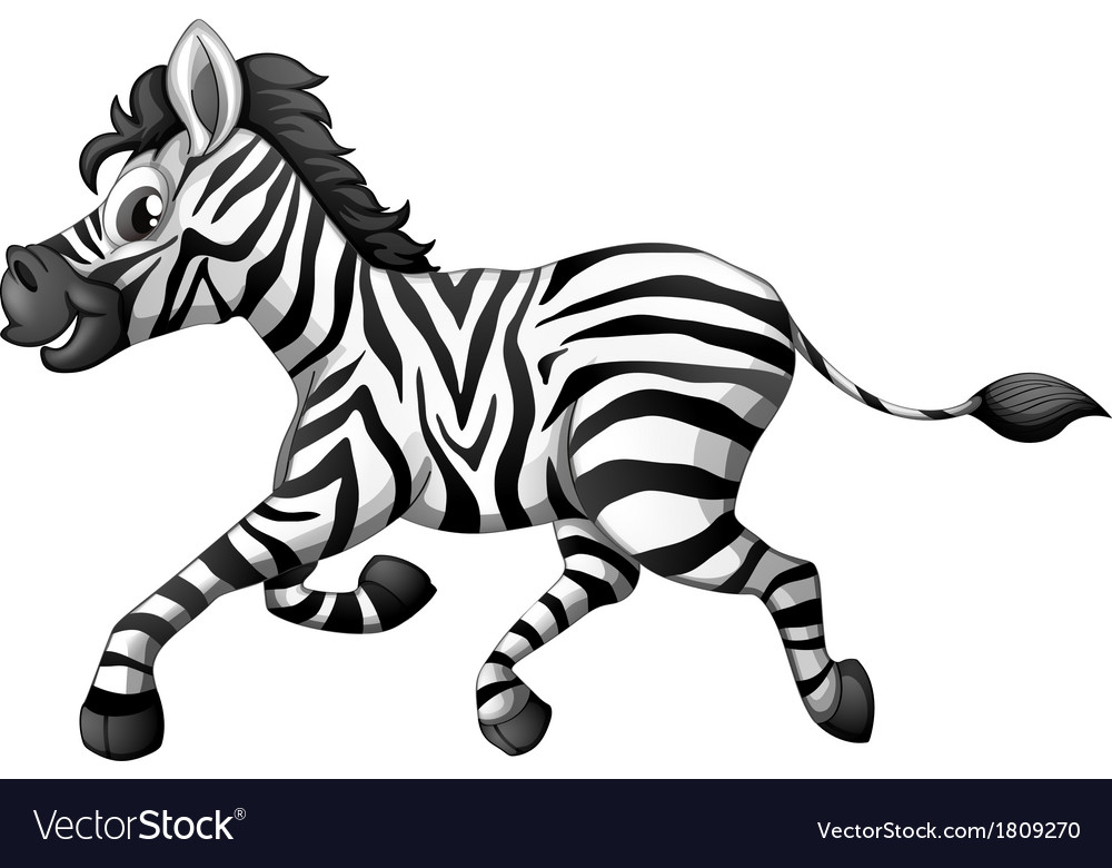 A Zebra Running Royalty Free Vector Image