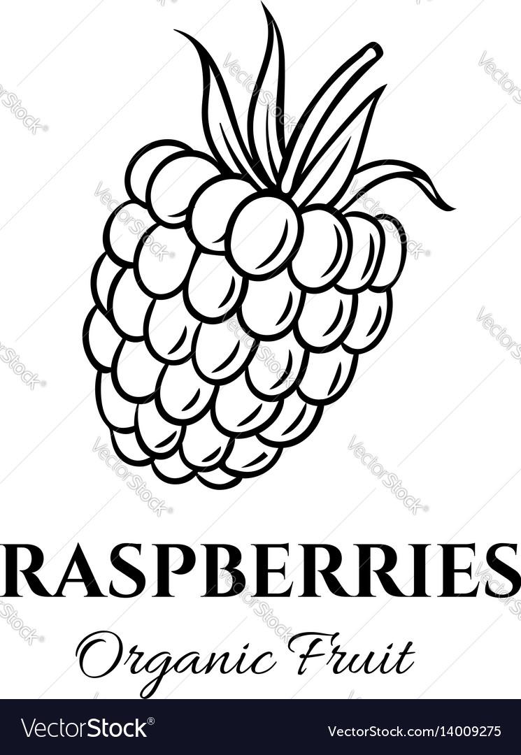 Hand drawn raspberries icon