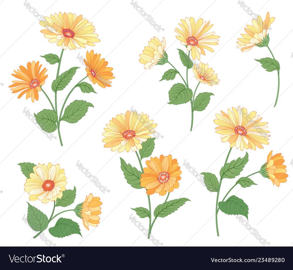 Flower calendula bouquet set floral summer garden