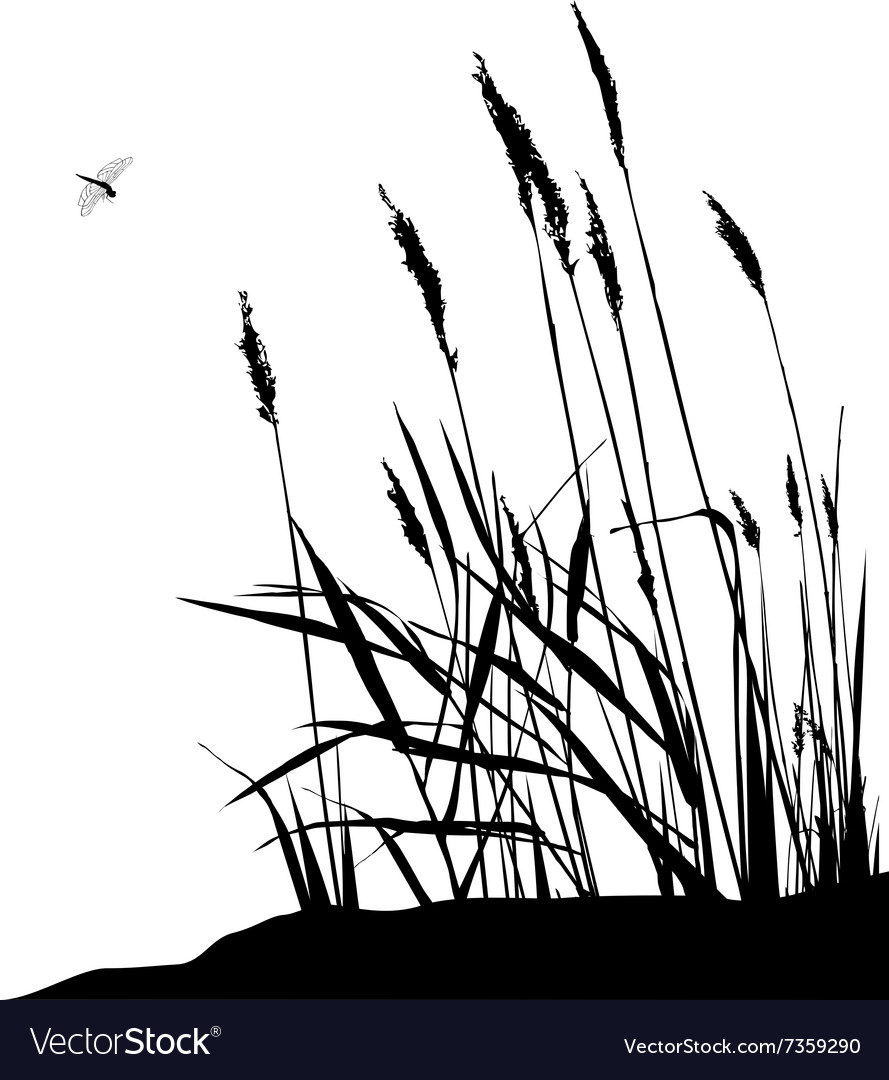 Reeds and dragonfly