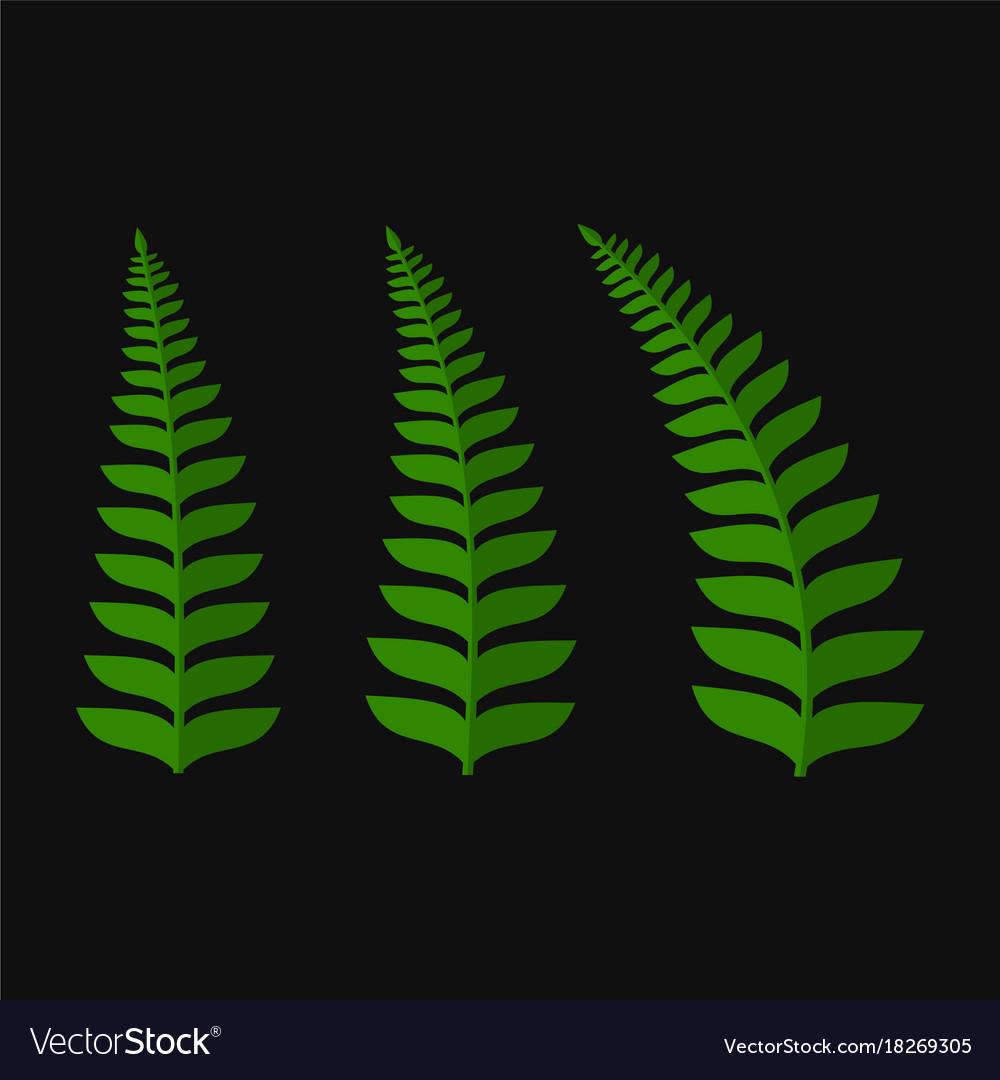 Green fern leaf set