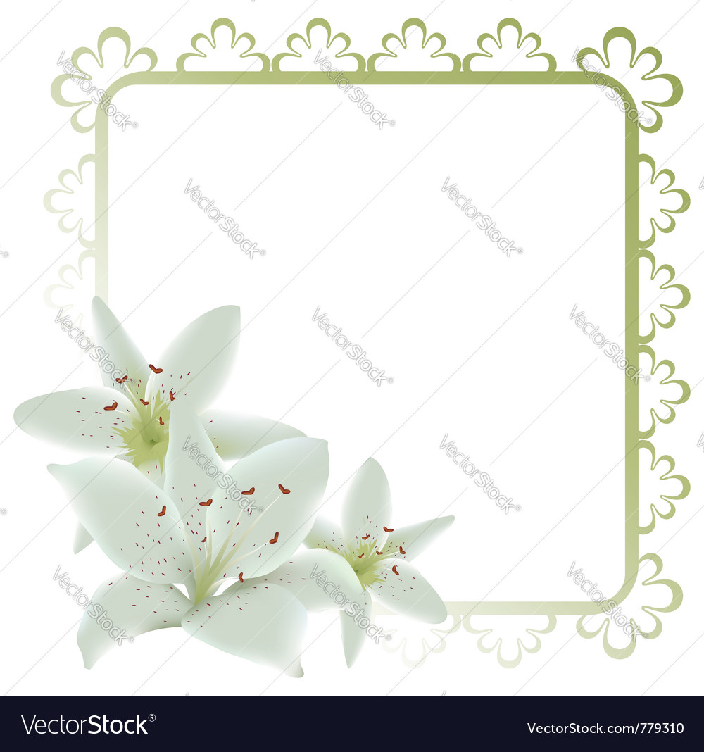 Lily Flowers Frame Royalty Free Vector Image Vectorstock