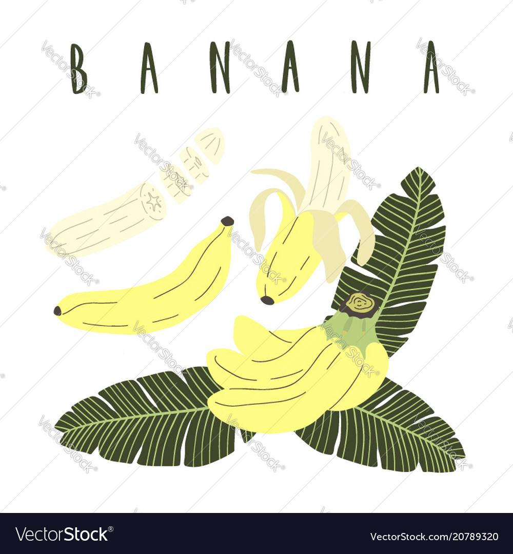 Hand drawn cartoon set of whole sliced banana