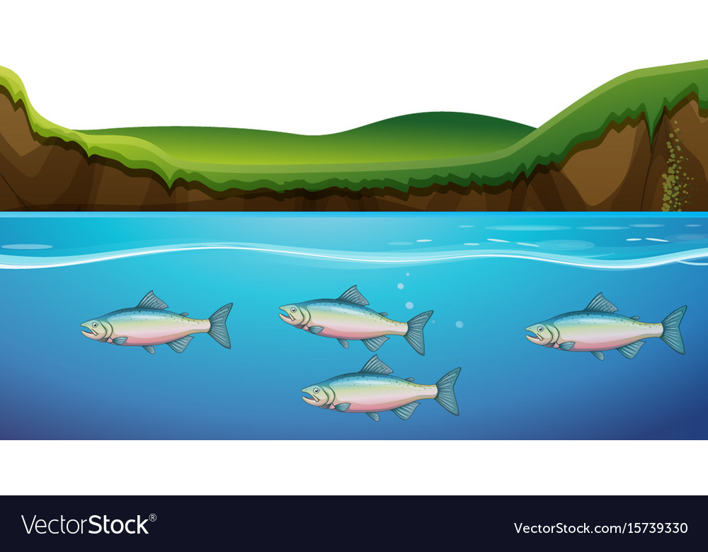 scene with fish under the river royalty free vector image vectorstock