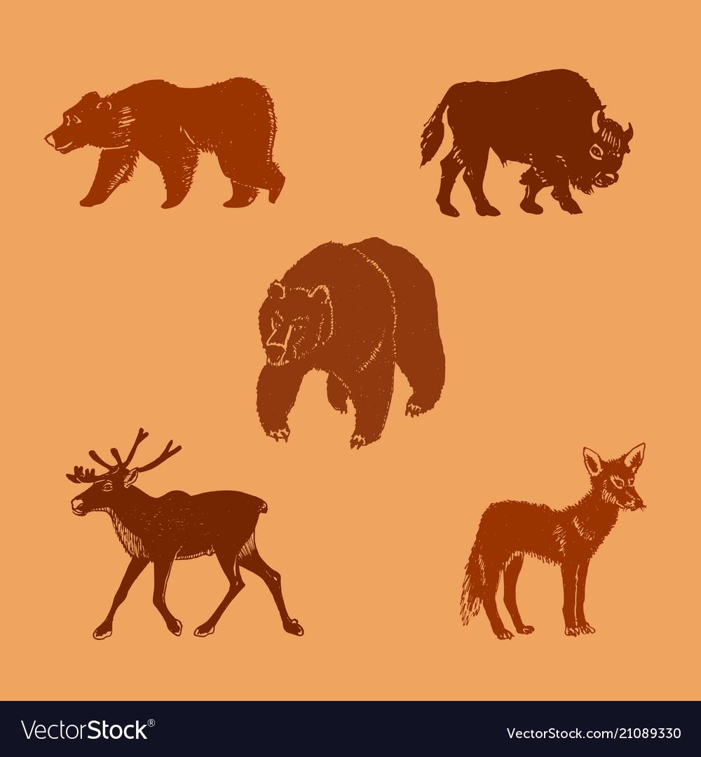 Wild animalshand drawn