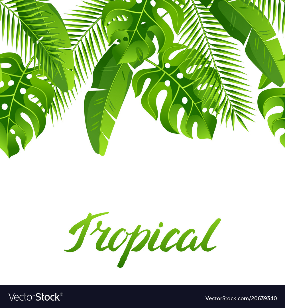 Seamless pattern with tropical palm leaves exotic