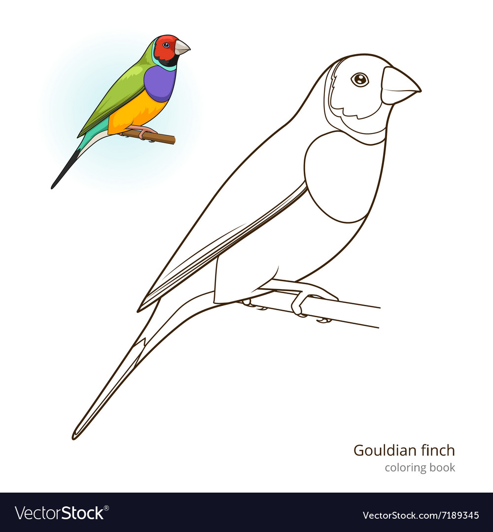 - Gouldian Finch Bird Coloring Book Royalty Free Vector Image