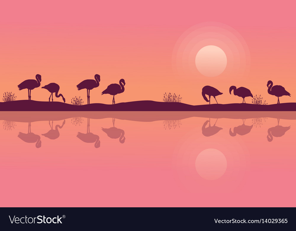 Flamingo on riverbank scene silhouette collection