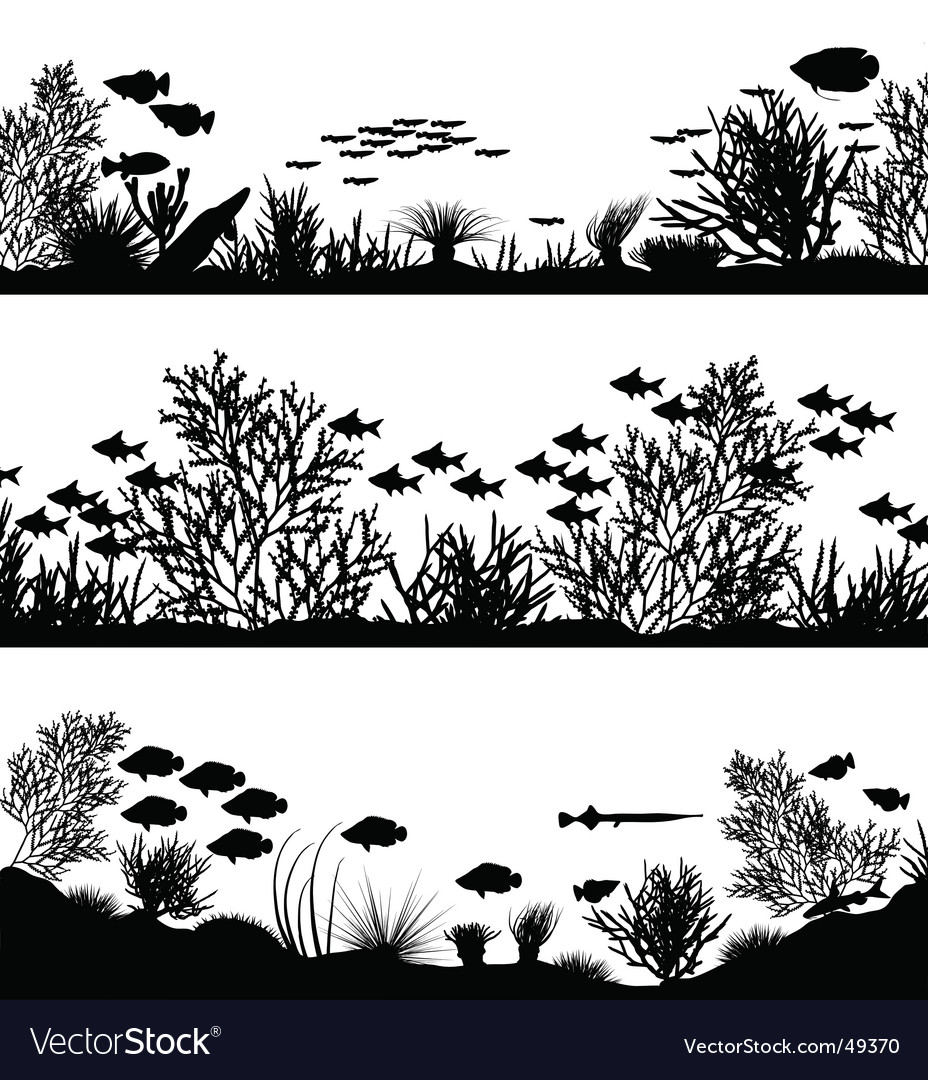 Coral foregrounds vector image
