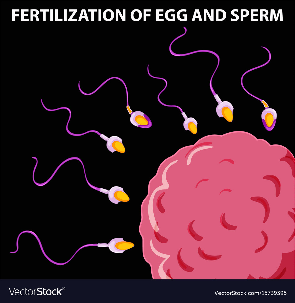 Commit diagram egg sperm cheaply got