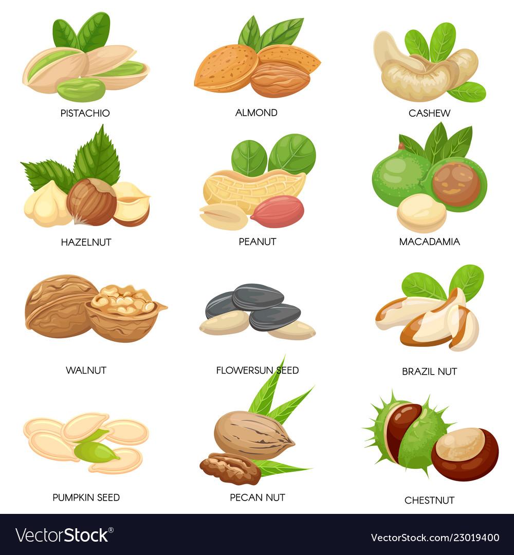 Nuts and seeds raw peanut macadamia nut and