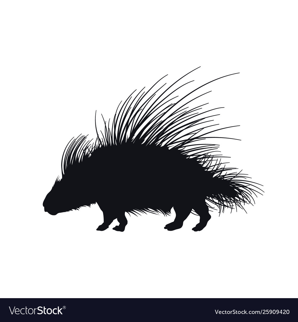 Black silhouette african porcupine