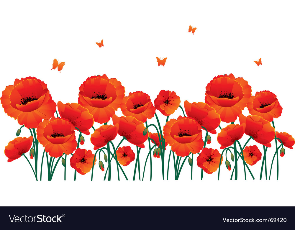 Poppy flower Royalty Free Vector Image - VectorStock