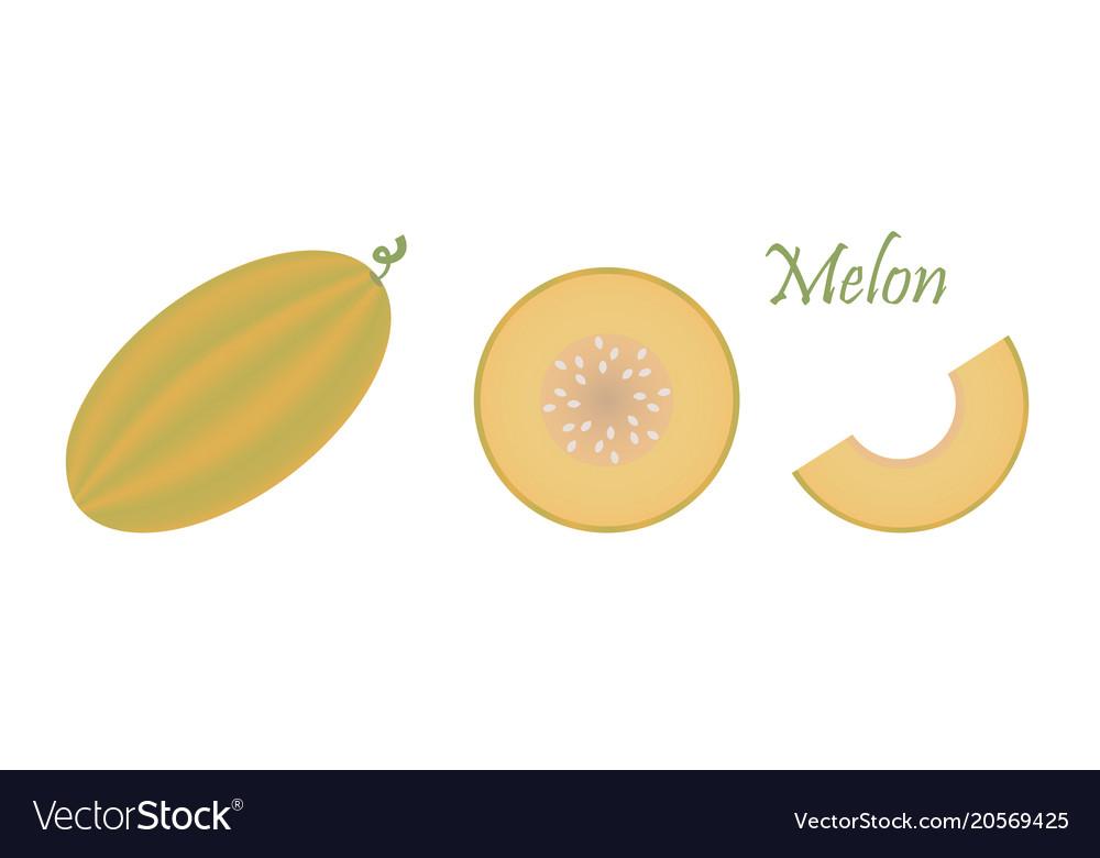 Melon fruit isolated on white background