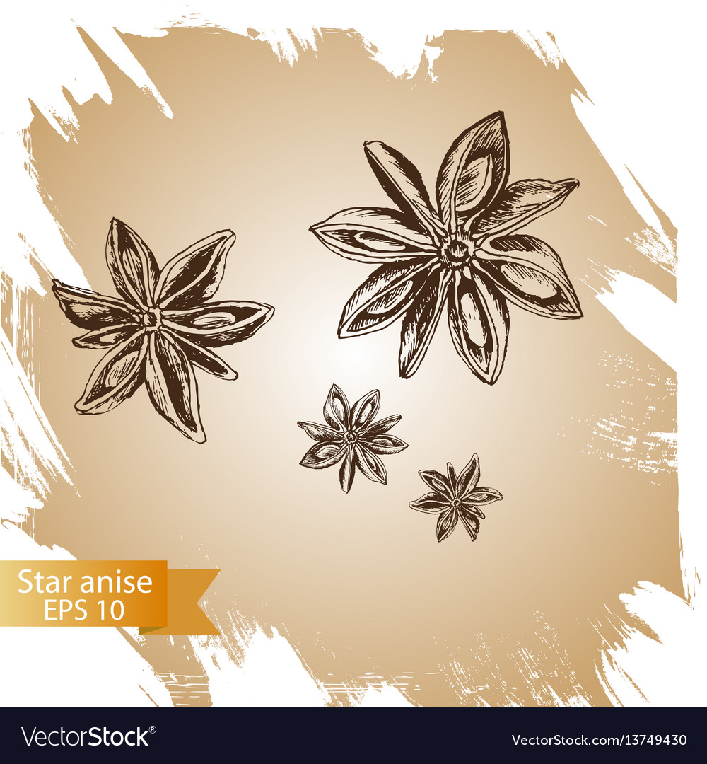 Background sketch star anis