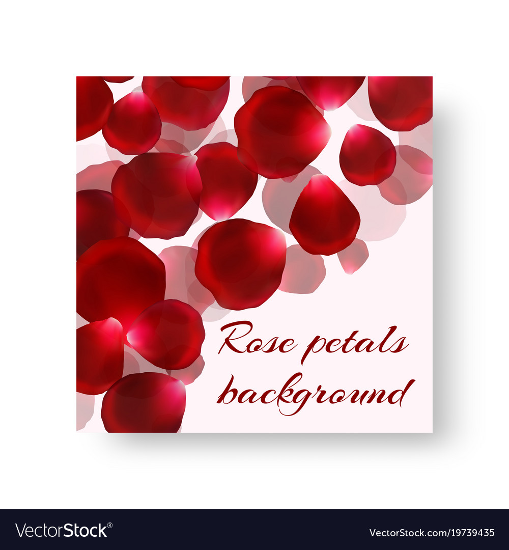 Template Greeting Card With Rose Petals Royalty Free Vector