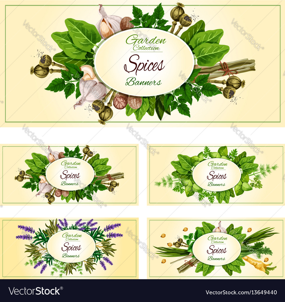 Fresh herbs spices and condiments banner set