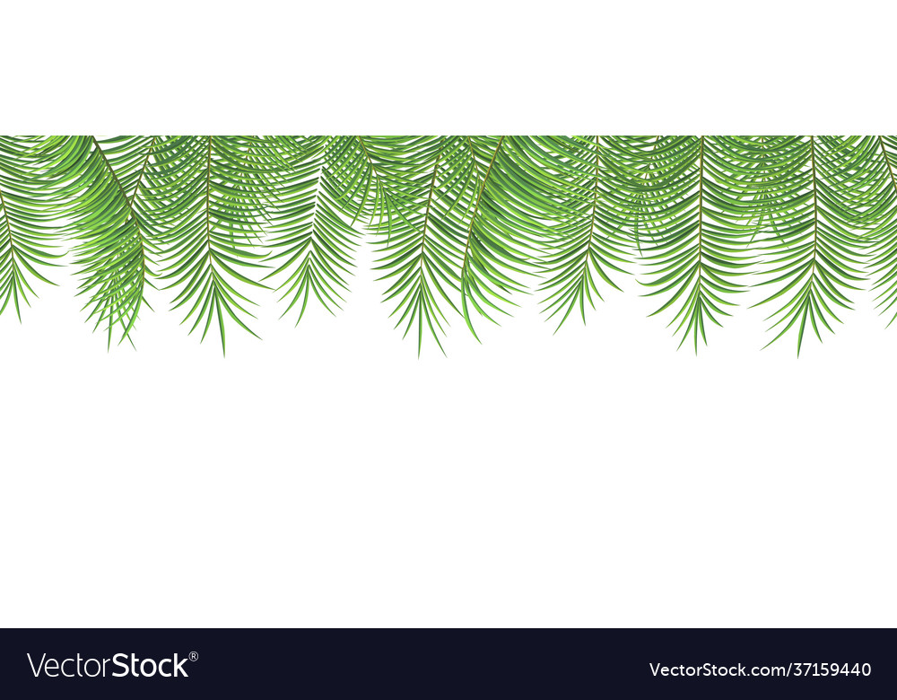 Seamless summer pattern palm leaves on white