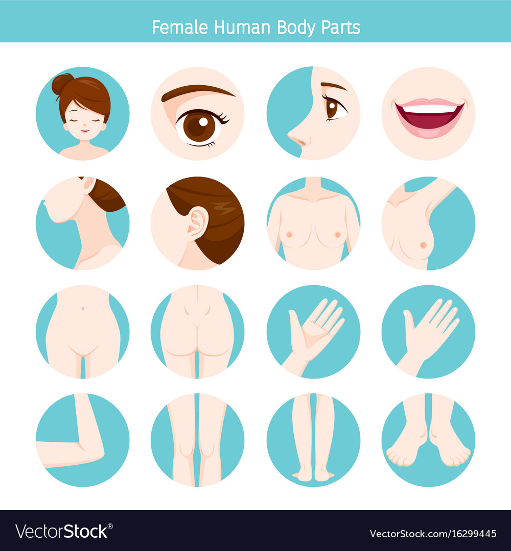 Female human external organs body set
