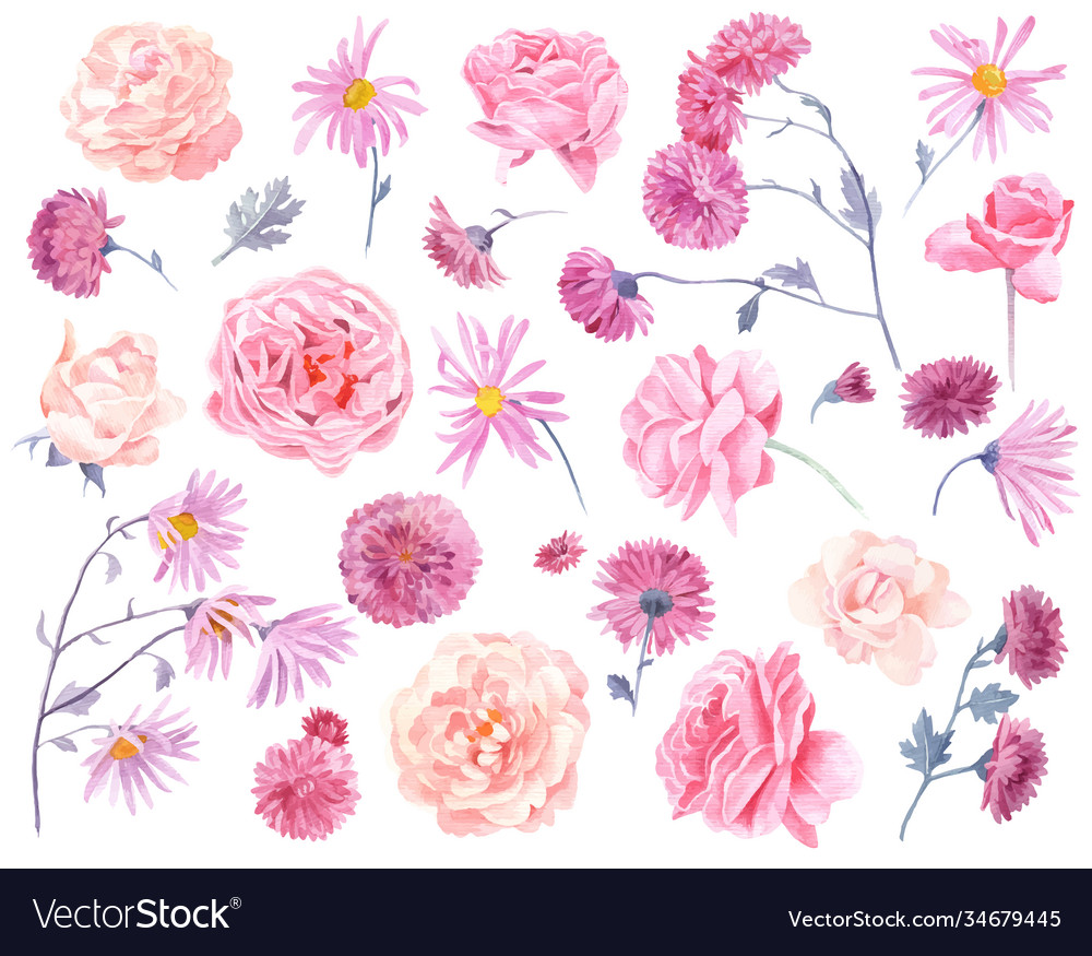 Set watercolor chrysanthemums and roses
