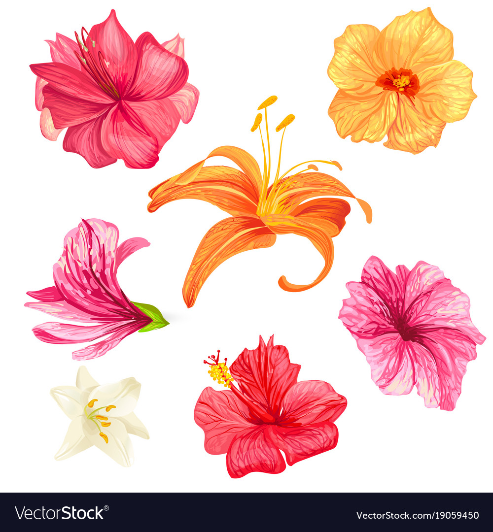 Hibiscus And Lily Flowers Royalty Free Vector Image