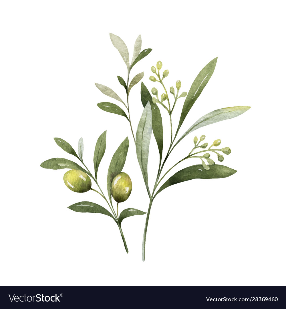 Watercolor bouquet olive branches and