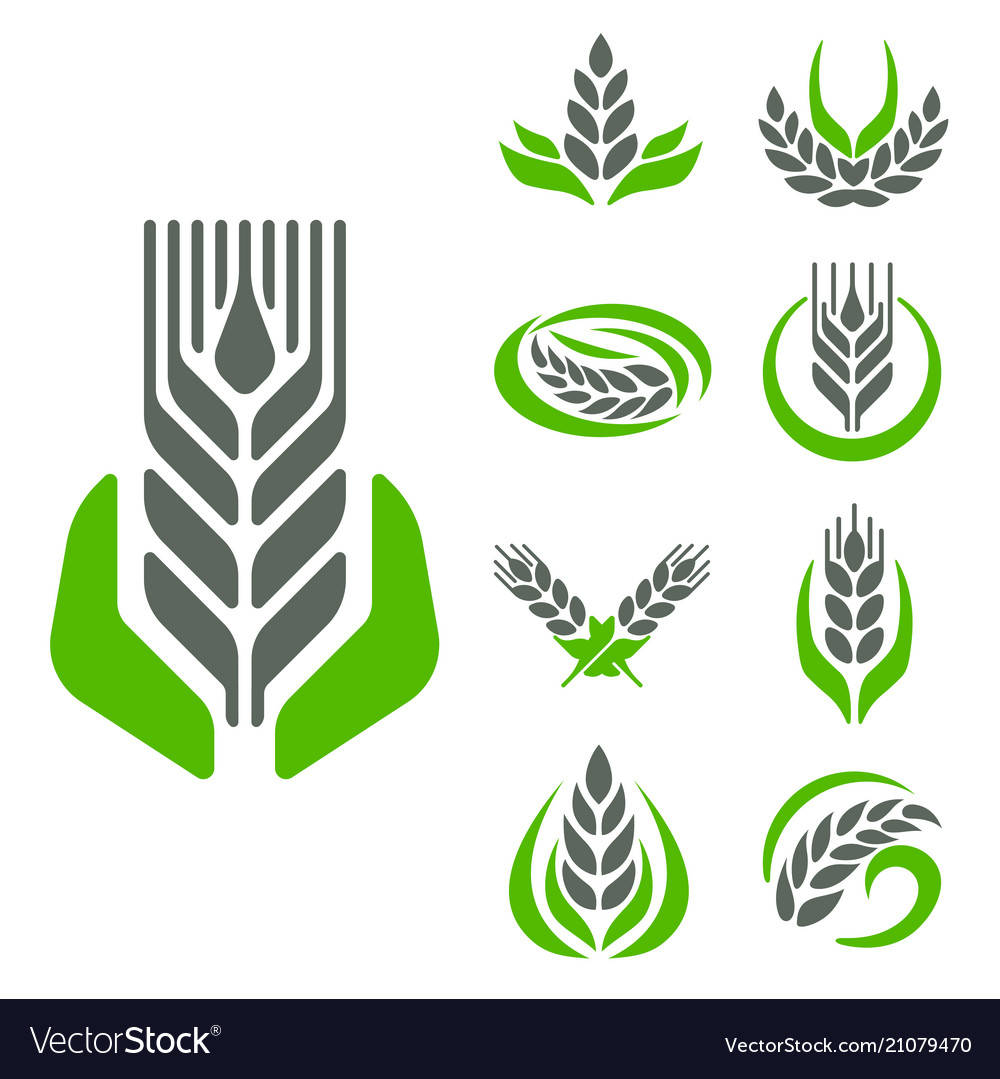Cereal ears and grains agriculture industry or
