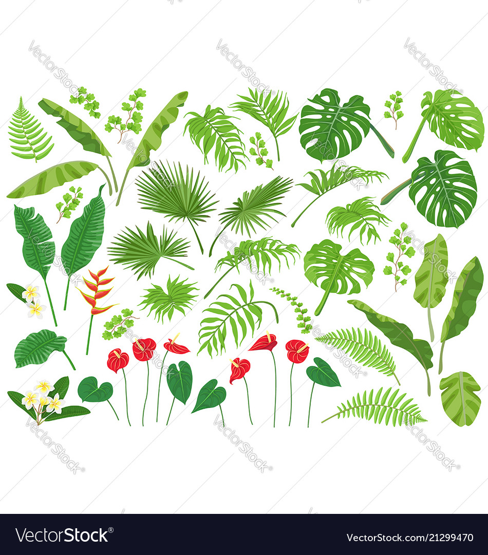 Tropical leaves and flowers big set