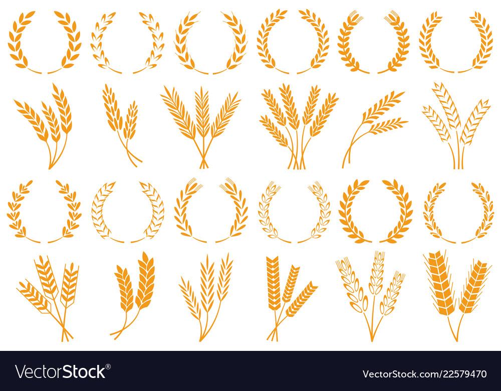 Wheat or barley ears harvest wheat grain growth