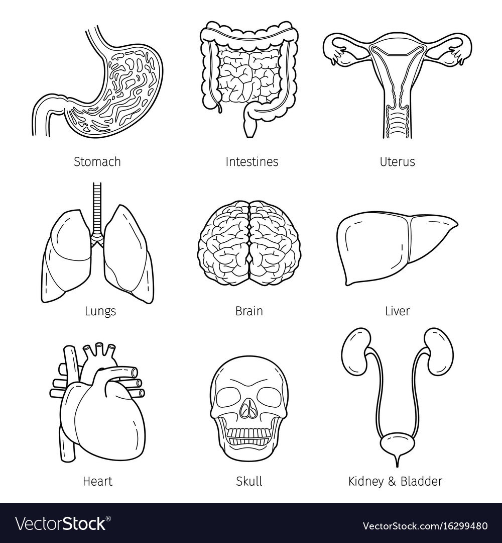 Human internal organs outline objects icons set