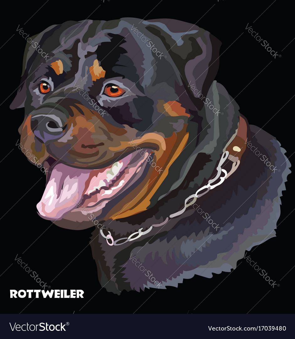 Rottweiler colorful portrait vector image