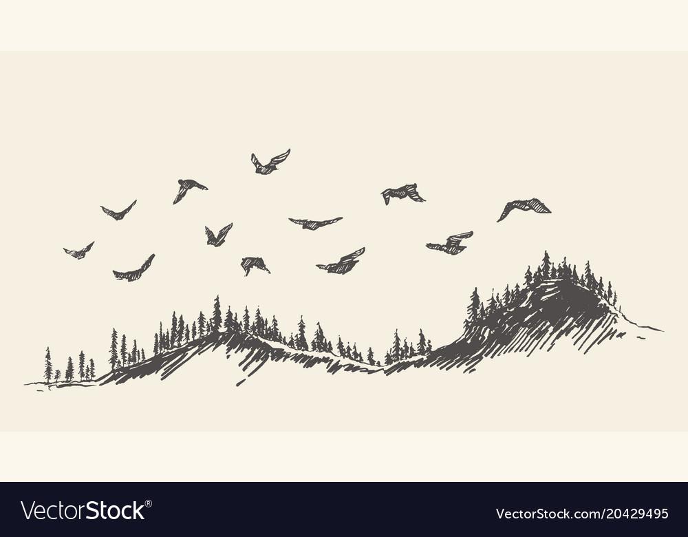 A flock of birds drawn sketch vector image