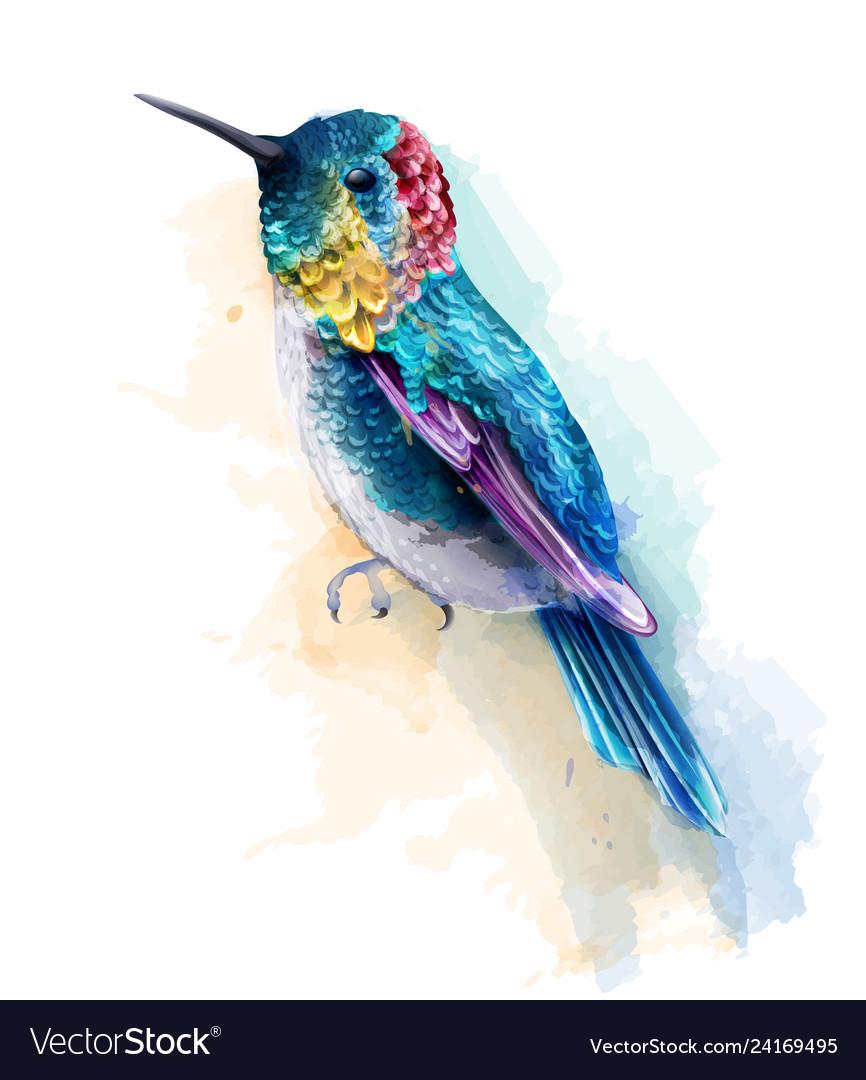 Colorful humming bird watercolor tropic