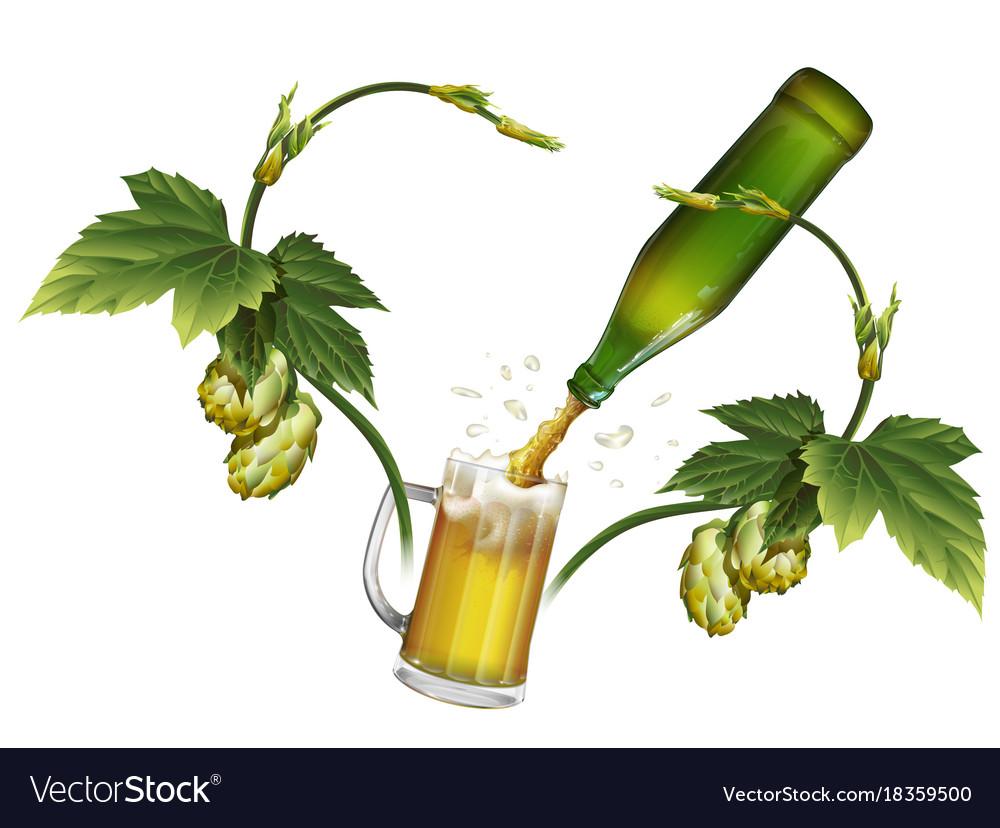 Beer mug hop green beer bottle