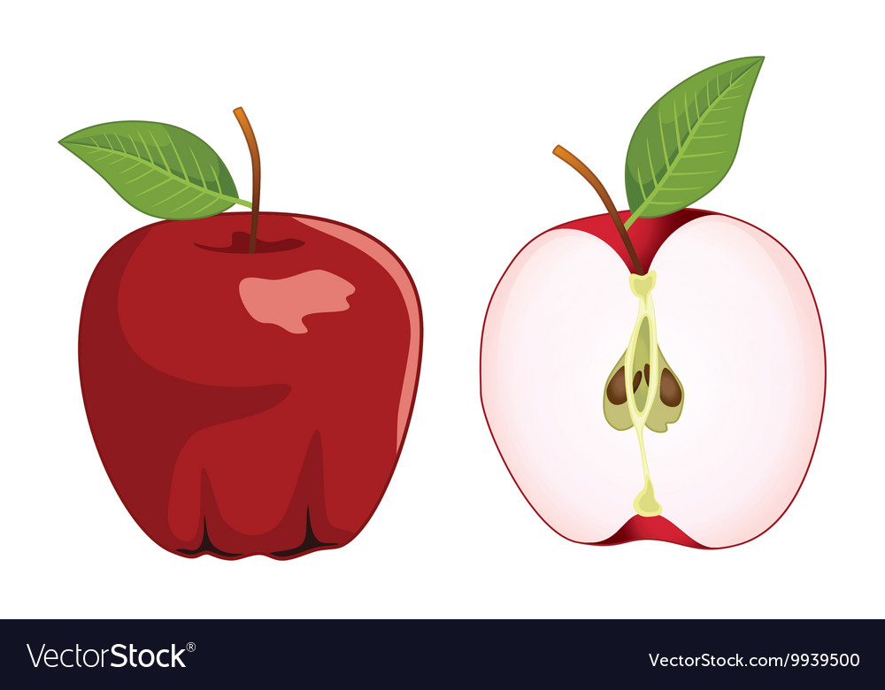 Red apple whole and half apple set