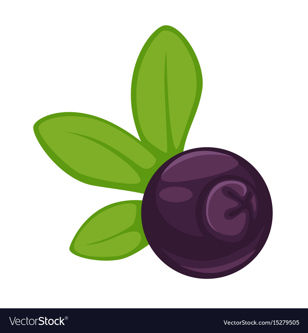 Blueberry dark purple fruit with green leaves